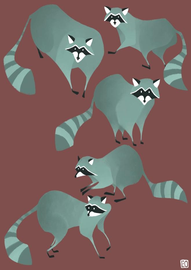 Raccoons_01_800px